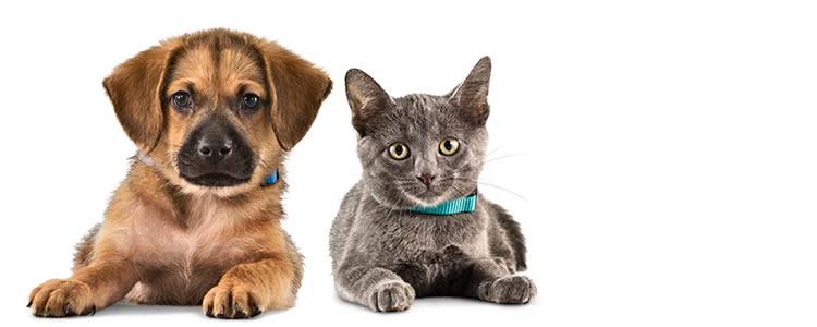 Seu pet merece: Banho antipulgas + tosa higiênica + limpeza de ouvidos + corte de unhas + acessórios