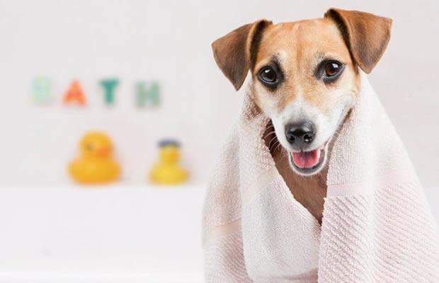 Banho (cães Até 12kg) + Corte De Unha + Com Limpeza De Ouvidos + Perfume + Enfeite